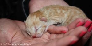 слепые-котята