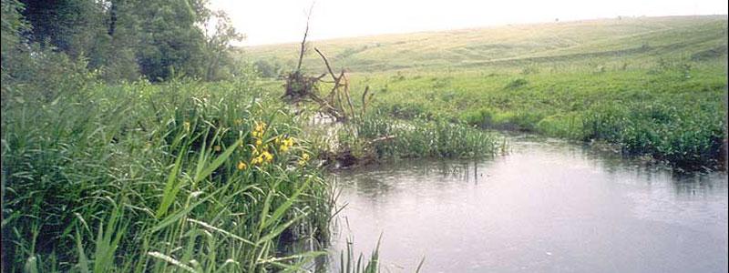 река Чернь