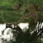 "отдых в деревне, экотуризм, знаменитый ""Бежин Луг"", река Снежедь, фототур по Тургеневским местам"