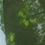 отдых в деревне, экотуризм, деревня Бежин Луг, река Снежедь, фототур по Тургеневским местам