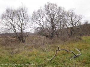 Отдых в деревне | поездка на выходные | Бежин Луг осенью | мостик через речку Снежедь